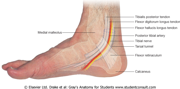 Lab 13: Knee/Ankle; Case 4