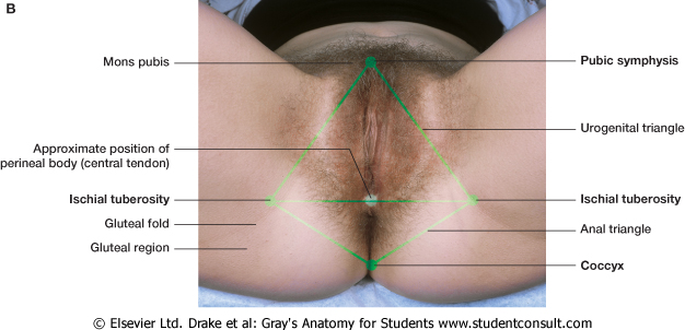 raznovidnosti-zhenskih-intimnih-organov