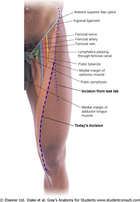Lab 13: Knee/Ankle; Case 4