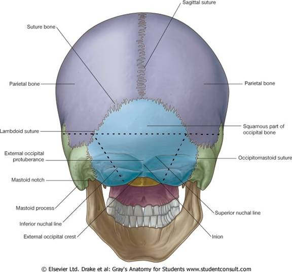 Lab 18: Head I